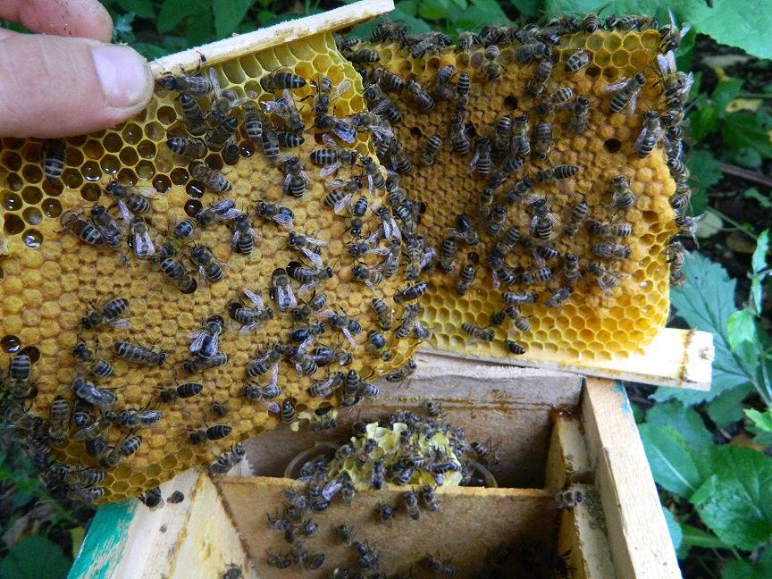 Как сажать пчел на спину 427